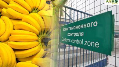 Photo of ҚР АШМ мемлекеттік инспекторлары 175 тонна өсімдік өнімін кіргізбеді