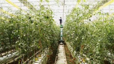 Photo of Корейская «умная ферма» появится в Казахстане