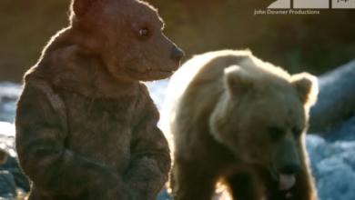 """Photo of Ученые """"внедрили"""" в семью медведей робота-шпиона"""