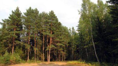 Photo of Информация о сокращении площадей лесов в Казахстане не соответствует действительности