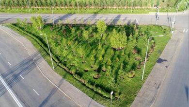 Photo of Вдвое увеличили компенсационную посадку при вырубке деревьев в Нур-Султане
