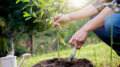 Photo of «АрселорМиттал Теміртау» компаниясына 500 мың ағаш отырғызу міндеттелді