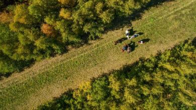 Photo of Теміртау төңірегінде «Жасыл белдеу» құрылады