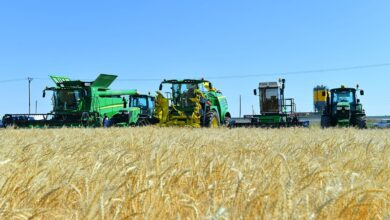 Photo of В МСХ рассказали, от чего аграрии могут выгодно застраховаться