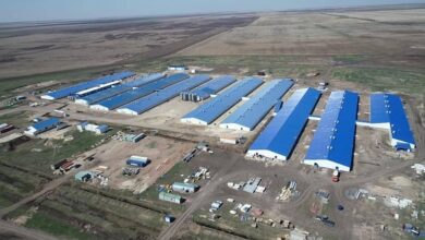 Photo of В СКО строят свинокомплекс стоимостью пять миллиардов тенге