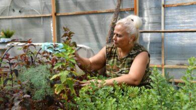 Photo of Минэкологии: В 2021 году планируется посадить около 130 млн. деревьев
