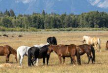 Photo of Страхование овец и лошадей будет субсидироваться государством – МСХ РК