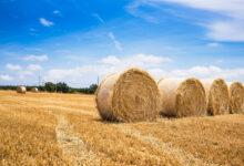 Photo of Заготовлено 23,2 млн тонн сена – Минсельхоз
